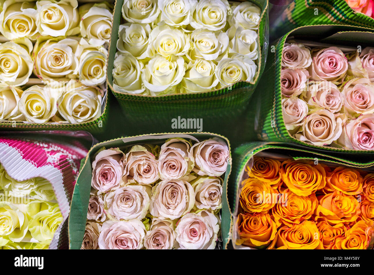 Hundreds of multicolored roses wrapped in paper fresh flower stock hundreds of multicolored roses wrapped in paper fresh flower background flower growing and production business wholesale and retail trade flower s mightylinksfo