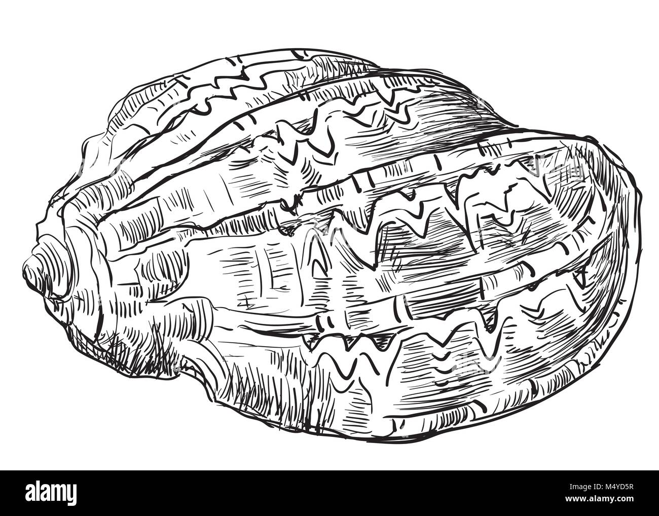 Hand drawing sketch of seashell. Vector monochrome illustration of seashell isolated on white background. - Stock Image