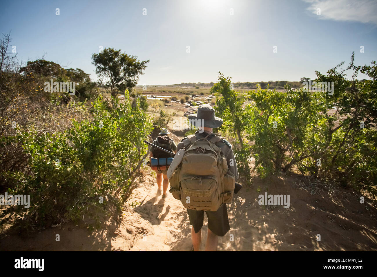 Game Rangers tracking through the bush looking for poachers. - Stock Image