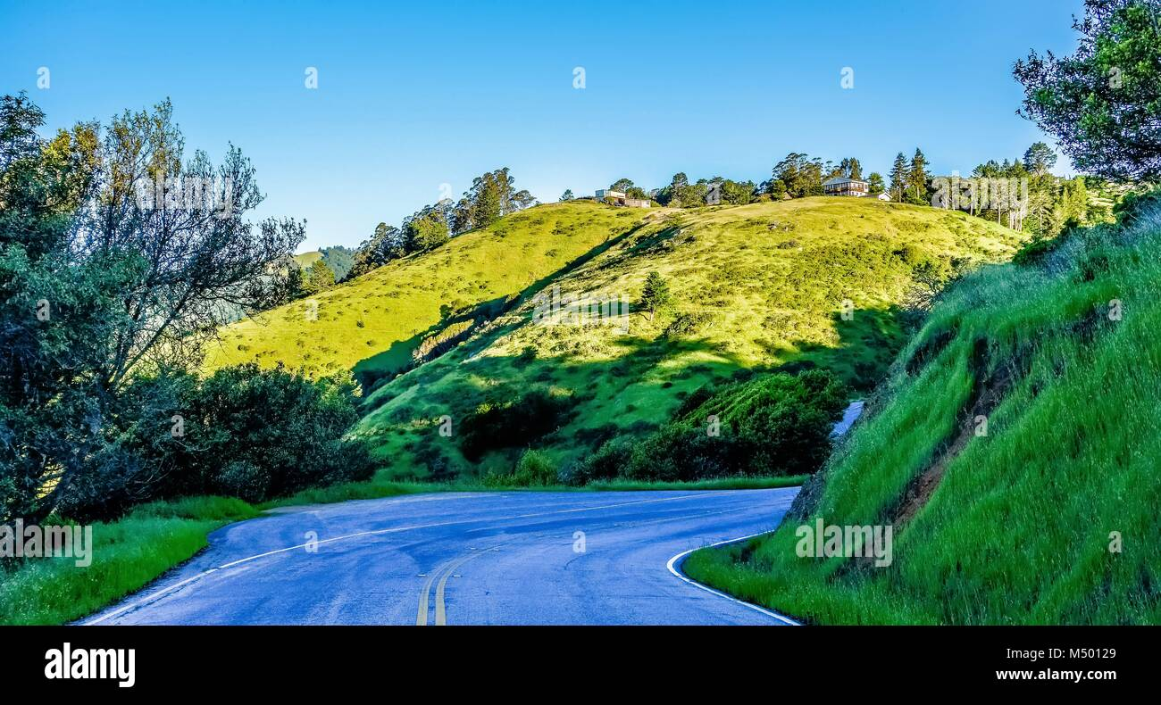muir woods forest drive by nature near san francisco - Stock Image