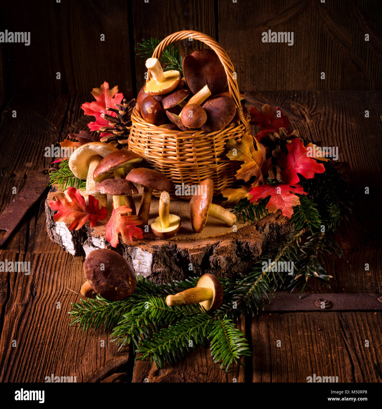 forest mushroom collections - Stock Image