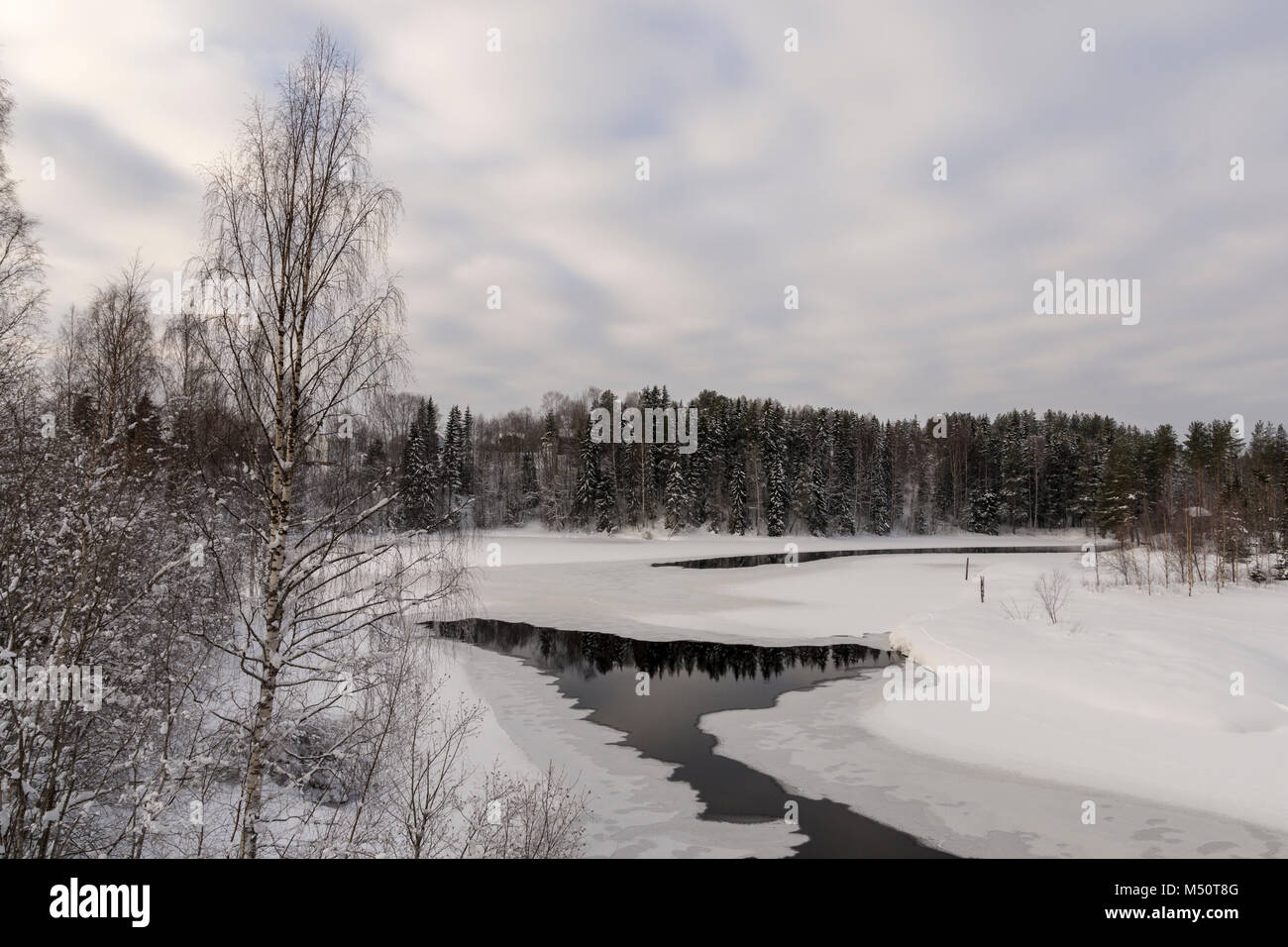 Frozen river with open spot reflecting trees and a birch in foreground and cloudy sky in background, picture from - Stock Image