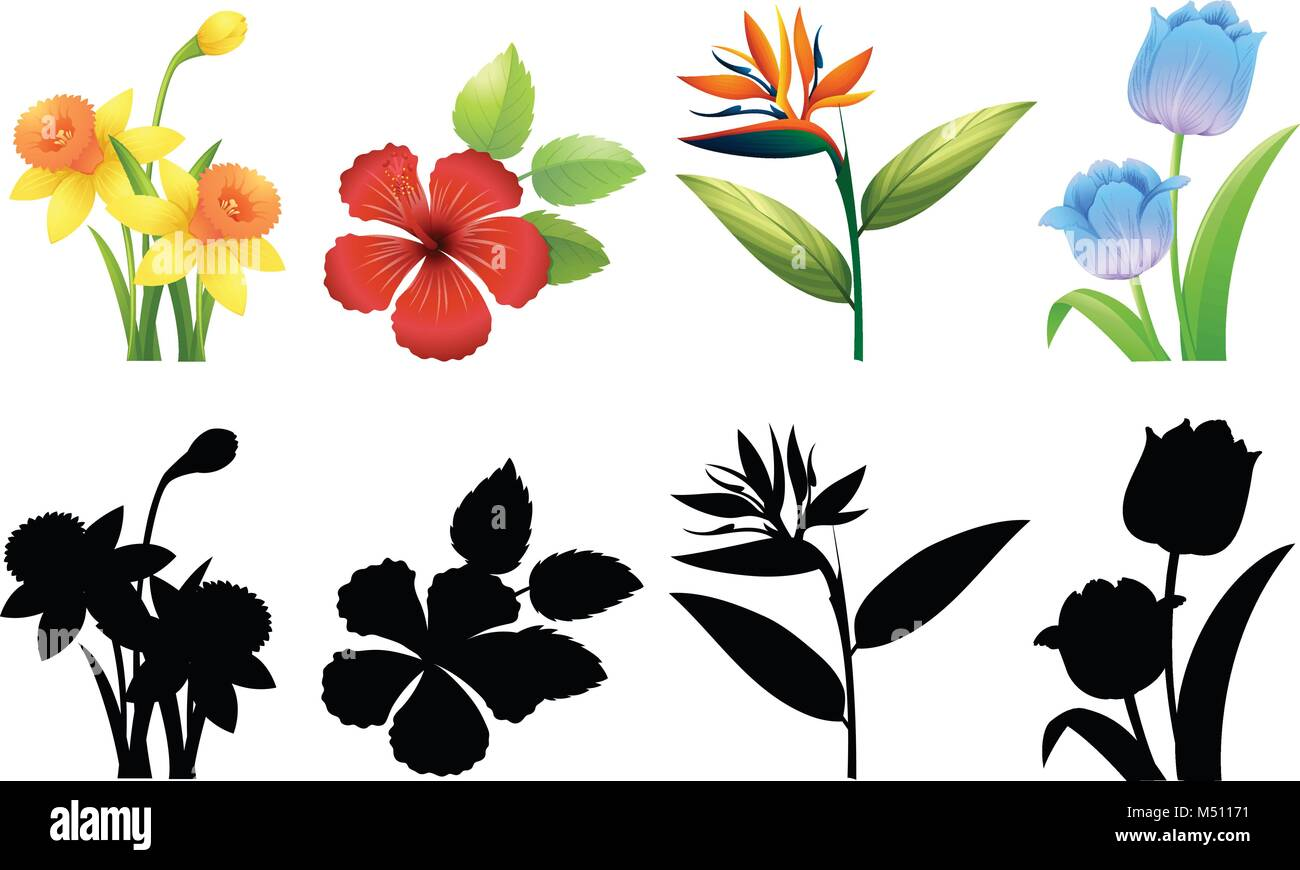Four Types Of Flowers On White Background Illustration Stock Vector