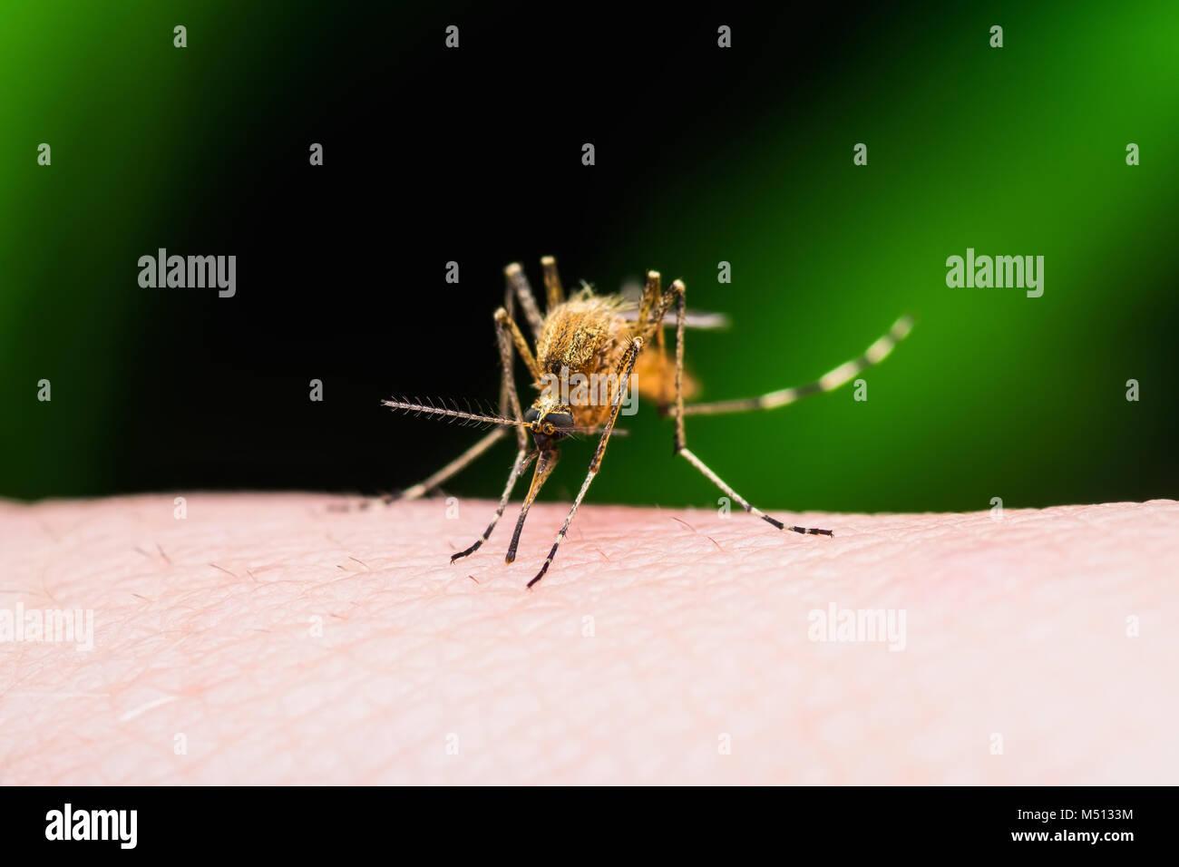Dengue Fever Infects La Fte De >> Dengue Fever Bite Stock Photos Dengue Fever Bite Stock Images Alamy