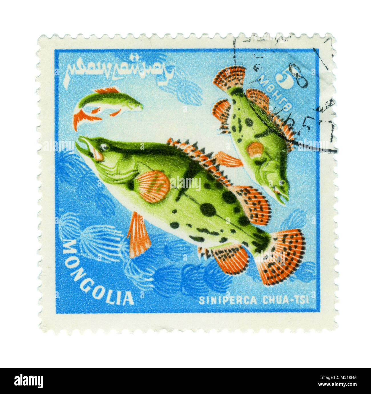 MONGOLIA - CIRCA : a stamp printed by Mongolia show the fishes with the inscription 'siniperca chuatsi', - Stock Image