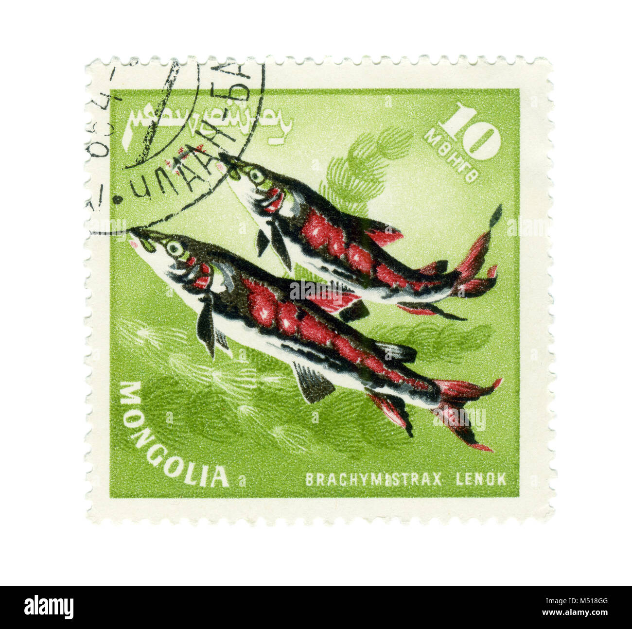 MONGOLIA - CIRCA : A stamp printed in Mongolia shows a Fish - Lenok with the inscription 'Brachymystax lenok', - Stock Image