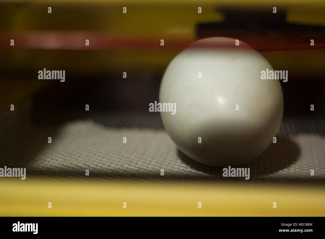 Kiwi bird egg in the nursery - Stock Image