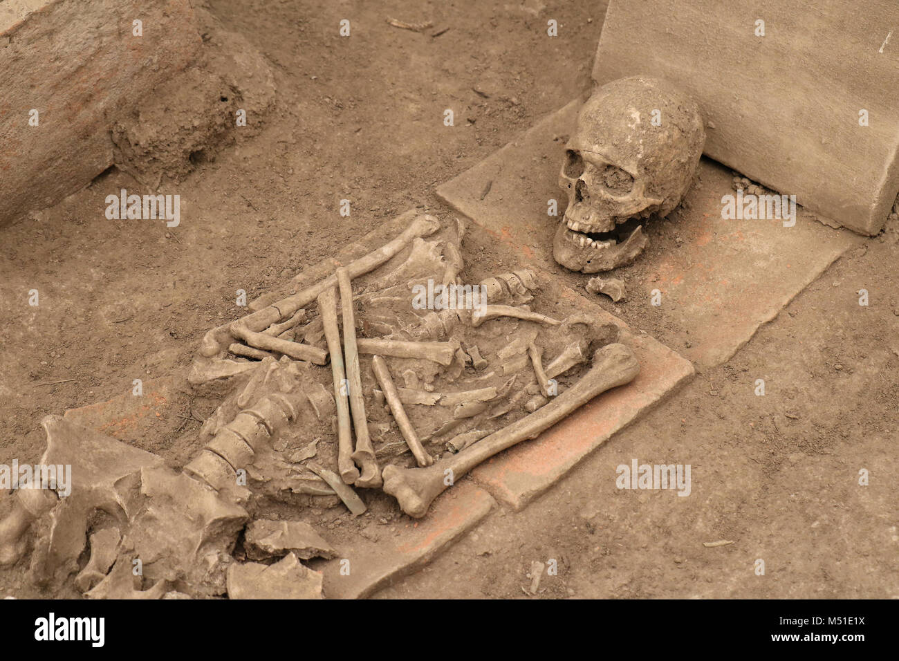 Human Bones Skeleton Covered With Dirty Dust Stock Photo 175209942