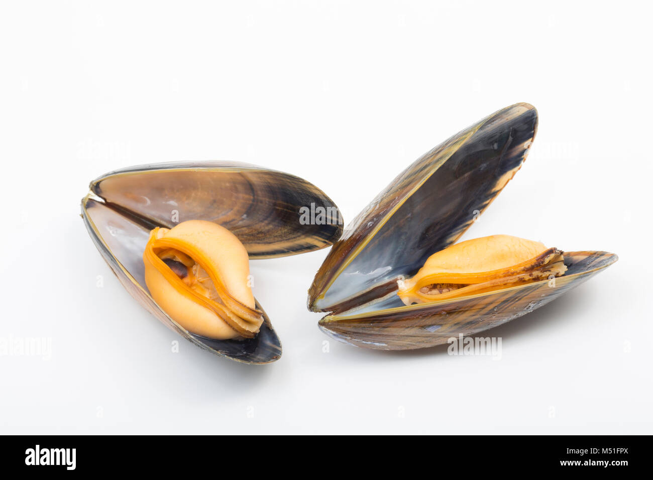 Cooked, rope-grown mussels, Mytilus edulis, bought from a supermarket. England UK GB - Stock Image