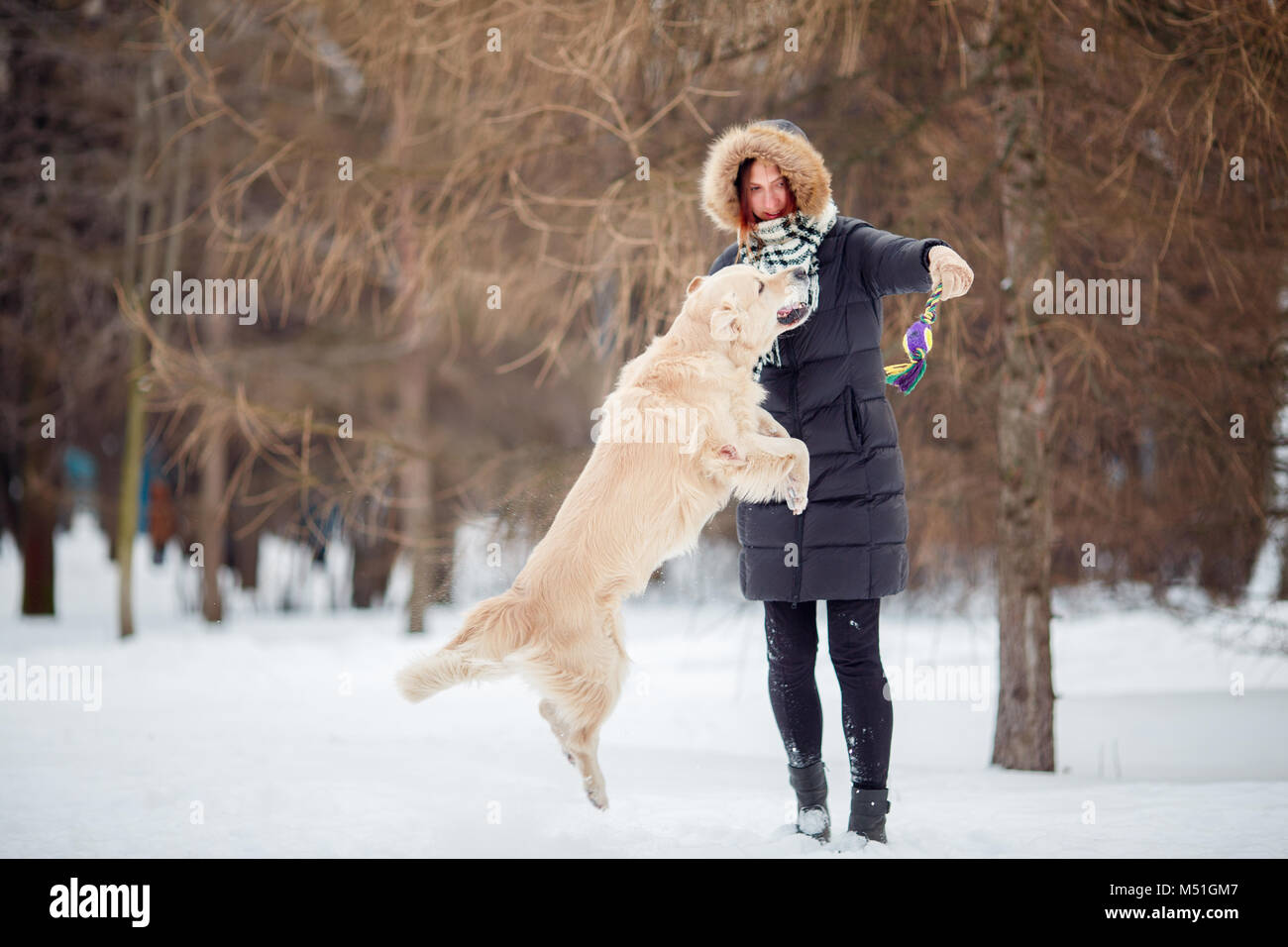 Image of woman playing with labrador in snowy park - Stock Image