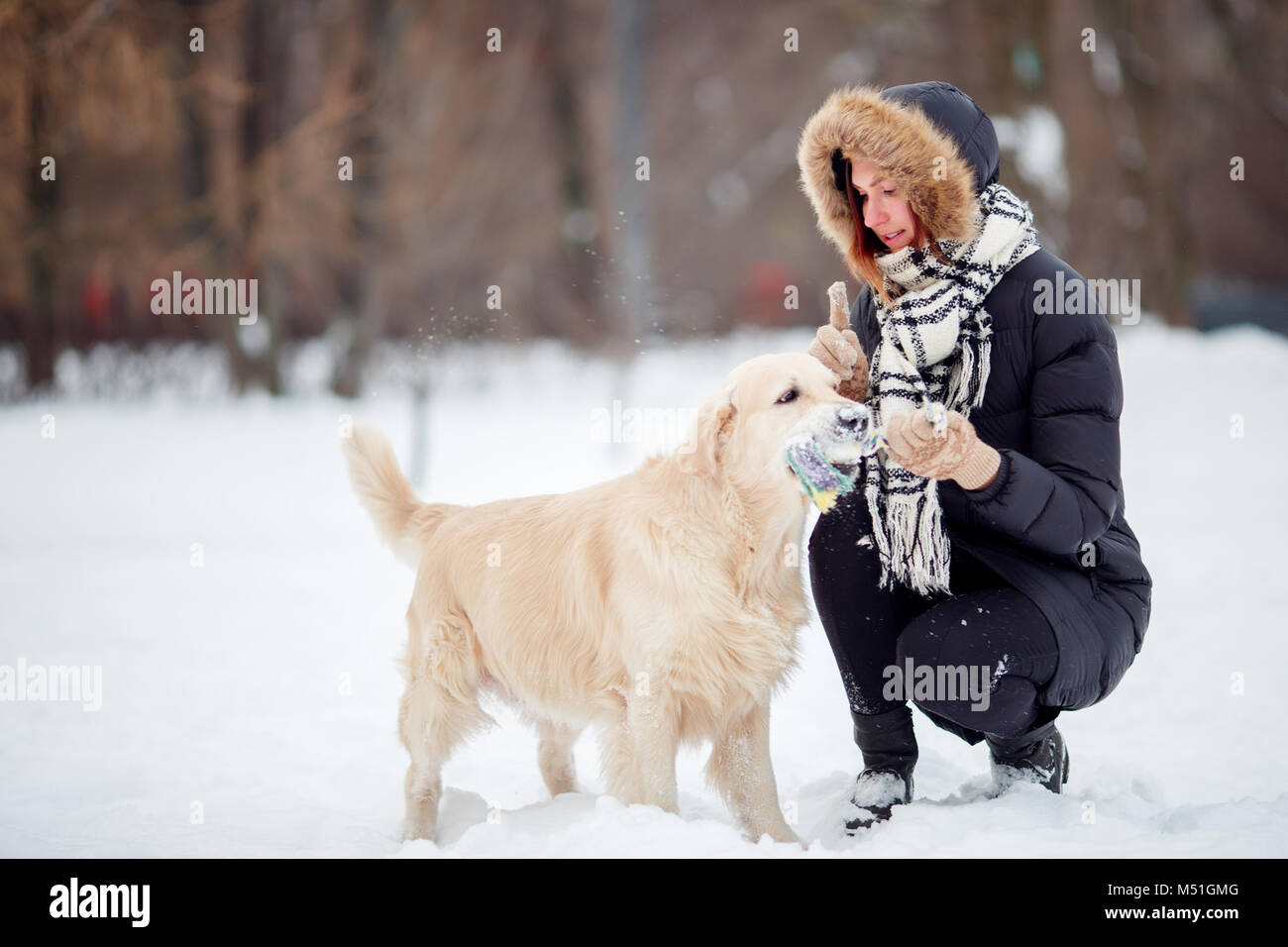 Photo of smiling woman squatting next to labrador with toy in teeth in winter - Stock Image