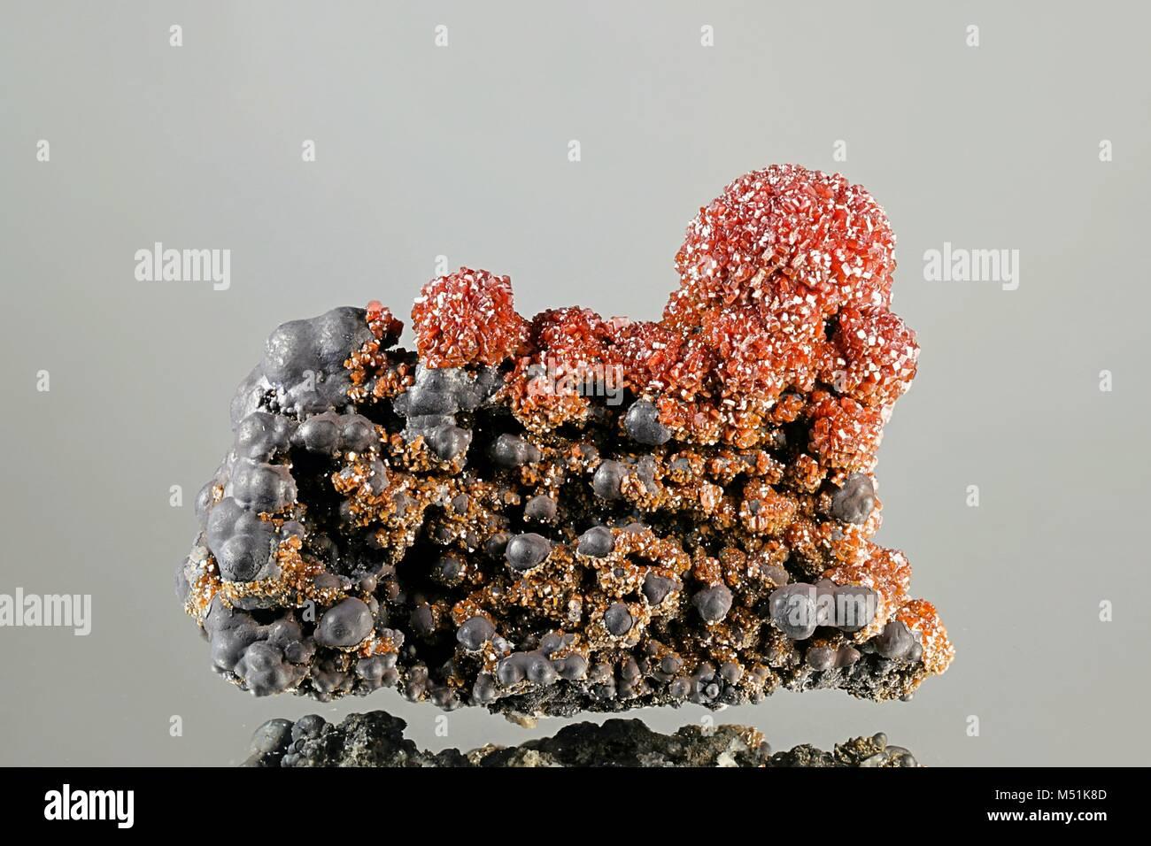 Vanadinite crystals on a botryoidal goethite matrix from Taouz, Morocco - Stock Image