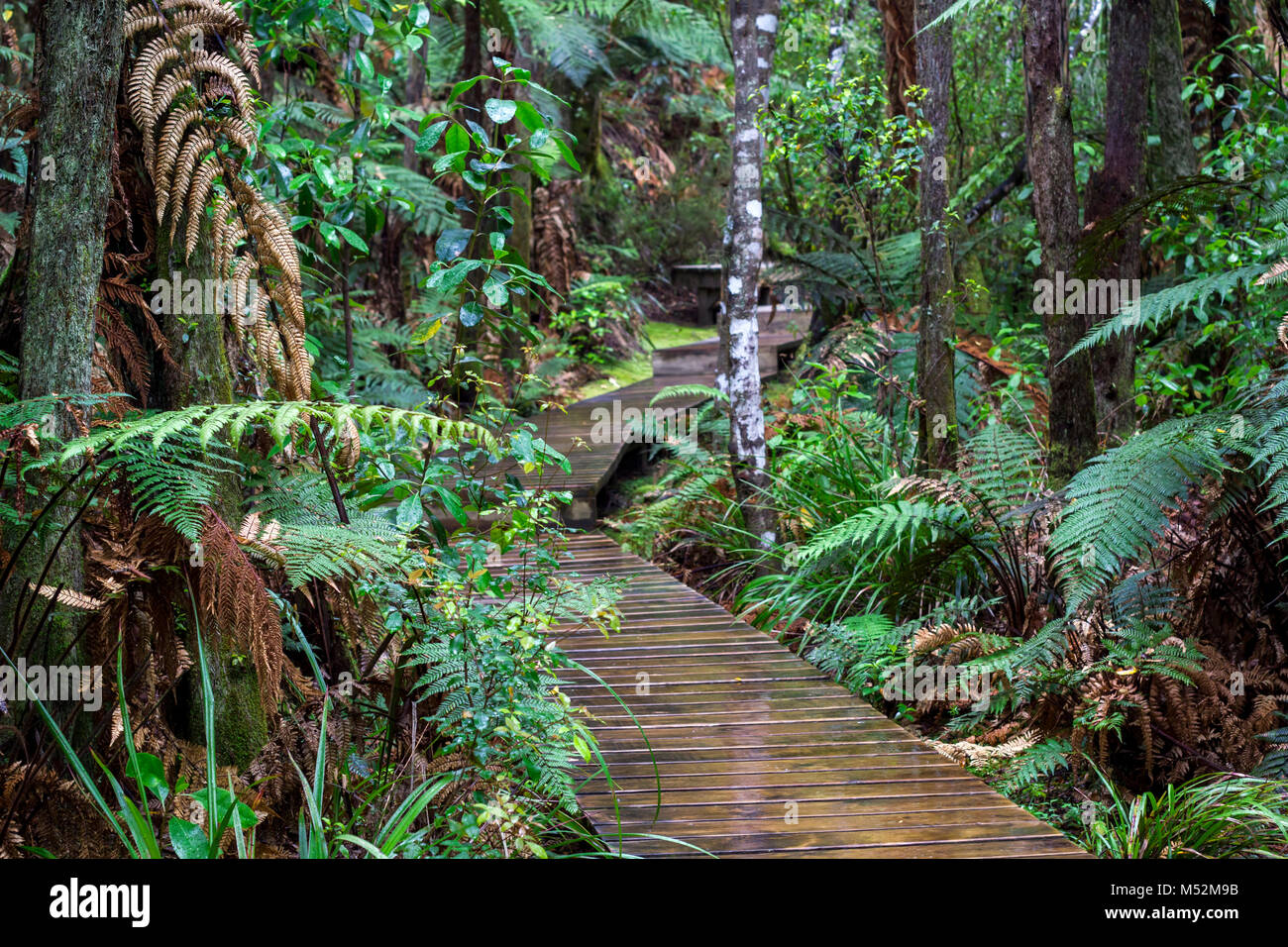 Magical forest hiking trail - Stock Image