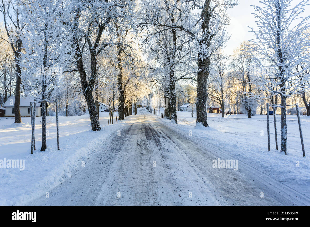 Slippery winter road through a tree avenue - Stock Image