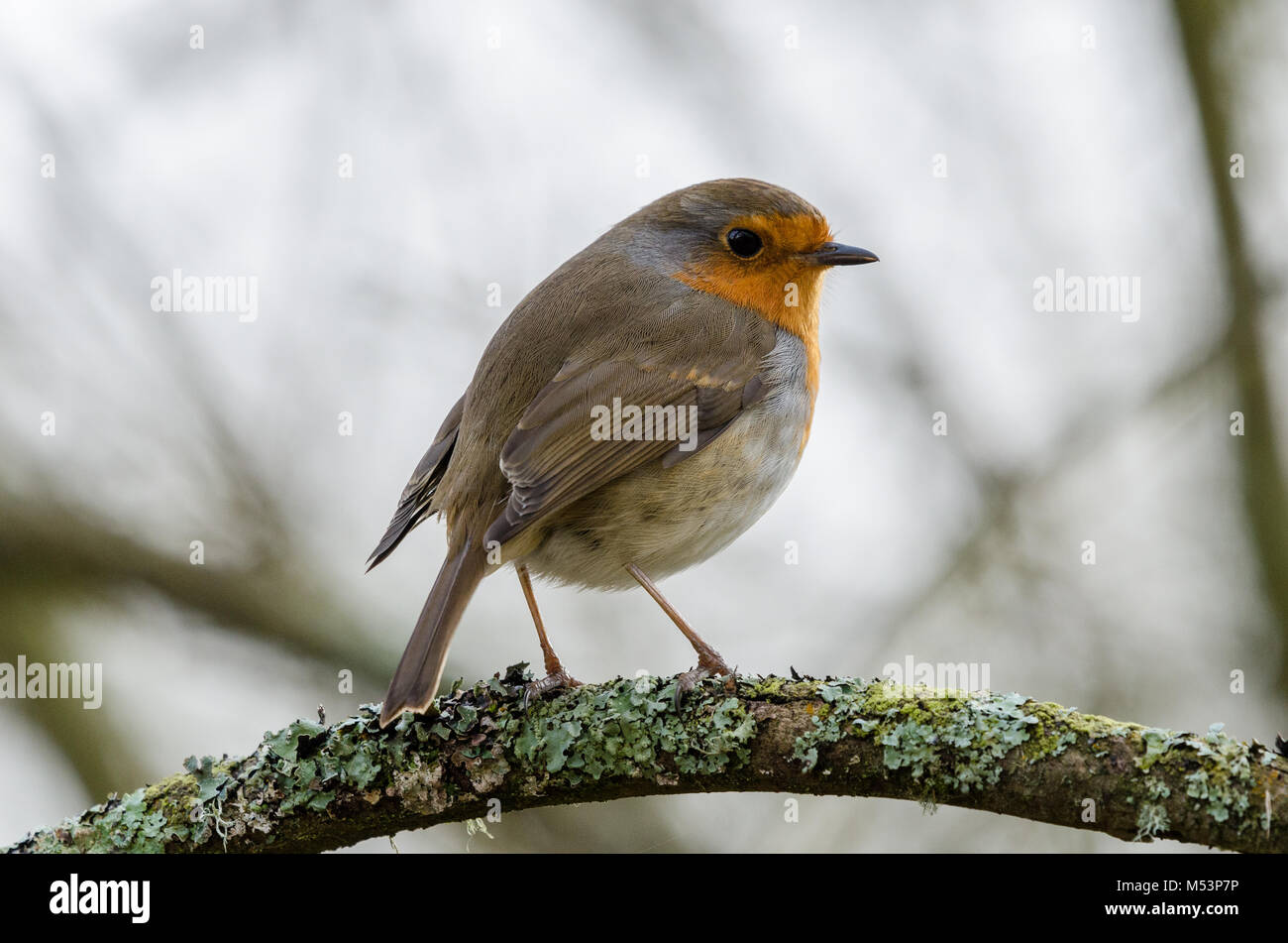 western palearctic - Stock Image