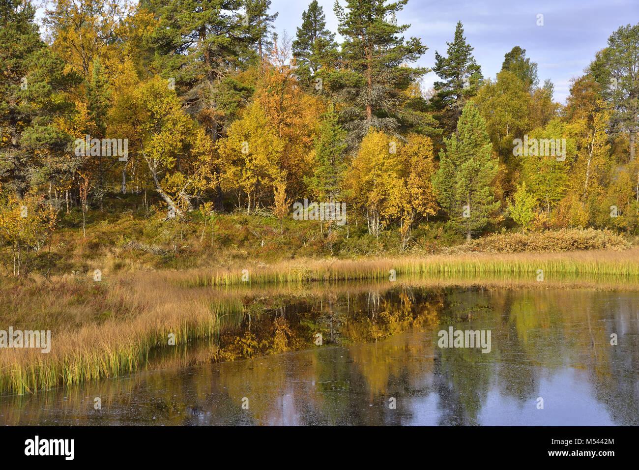 Rogen nature reserve - Stock Image