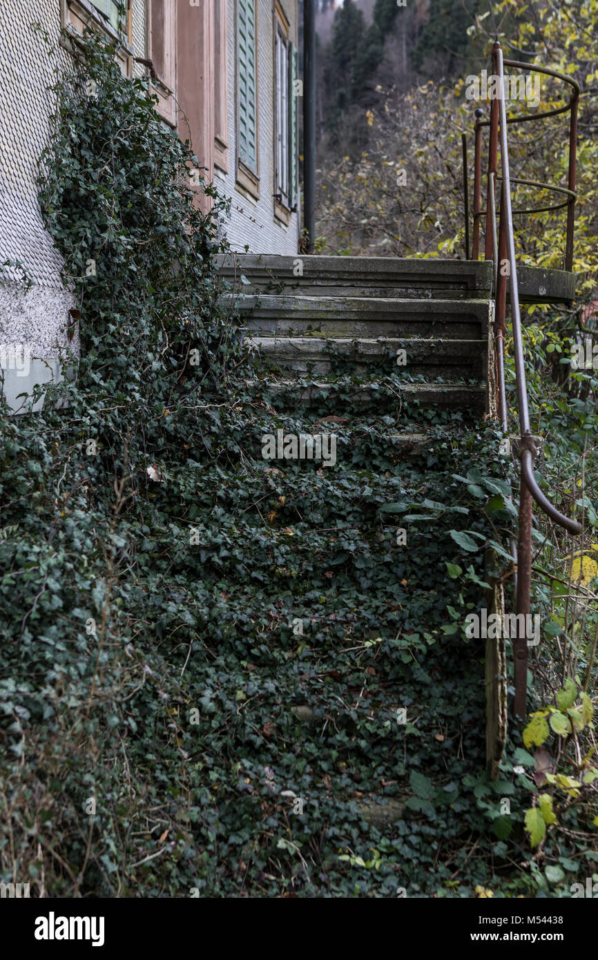Stairs overgrown with scrub. - Lost Place - Stock Image