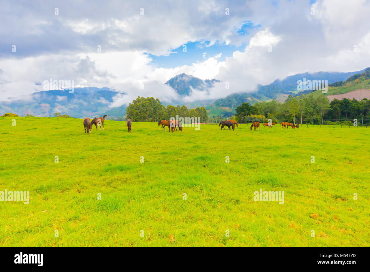 wild horses in a farm of Volcan City Panama Stock Photo