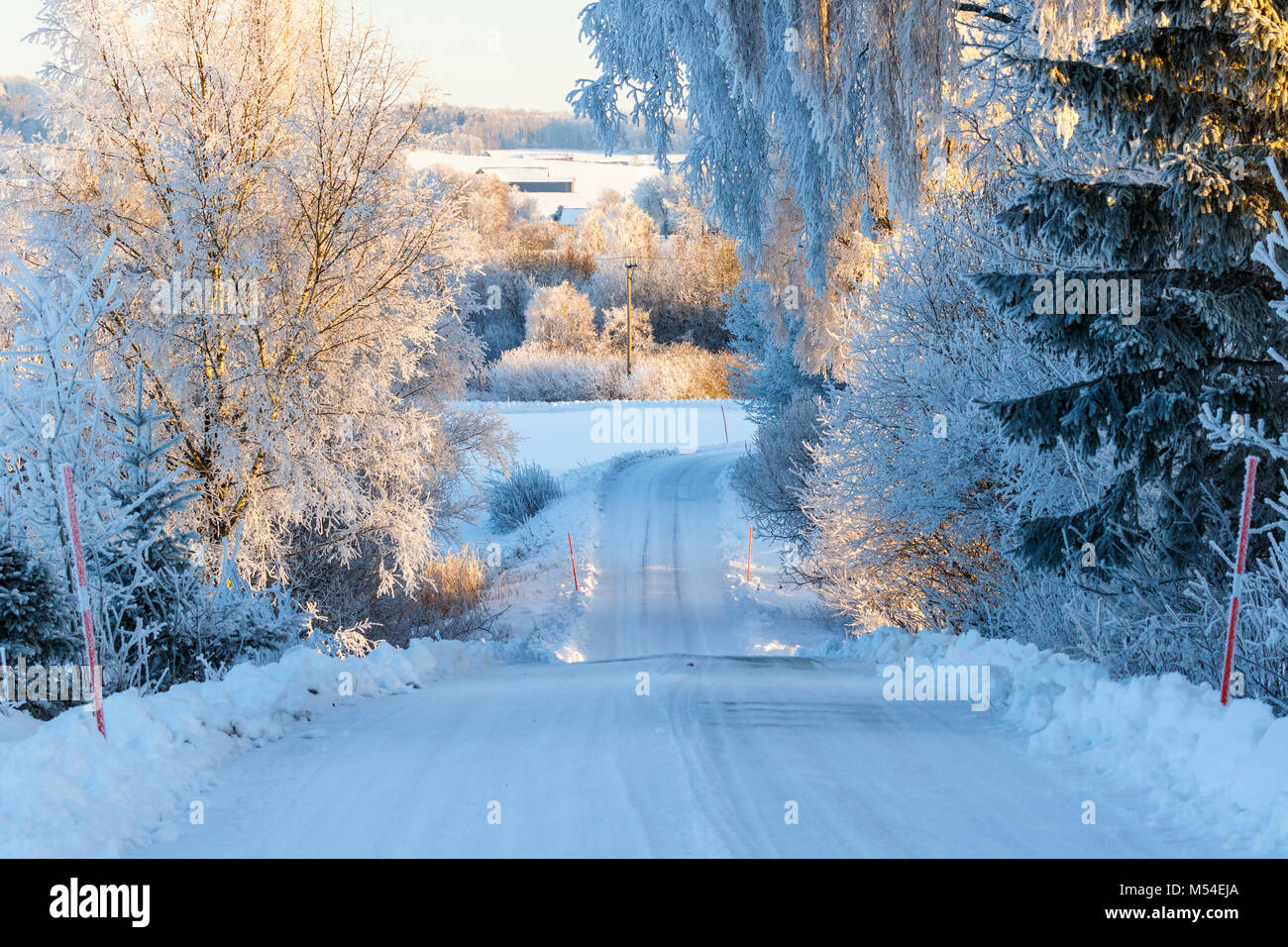 Slippery winter road on a road in the woodland - Stock Image