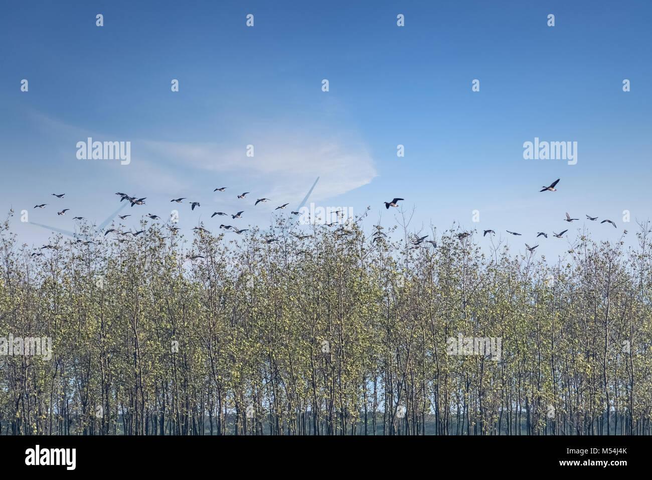 poyang lake migratory bird reserve landscape - Stock Image