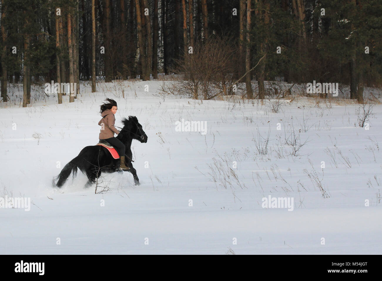 Young woman rides on top a bay horse in winter countryside - Stock Image
