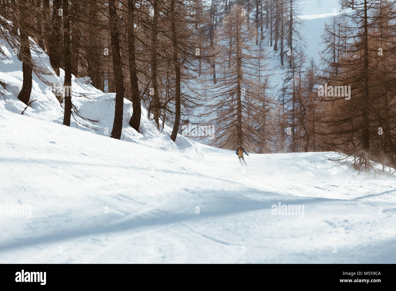 Skier skiing down the slope in the forest - Downhill in high mountains. - Stock Image