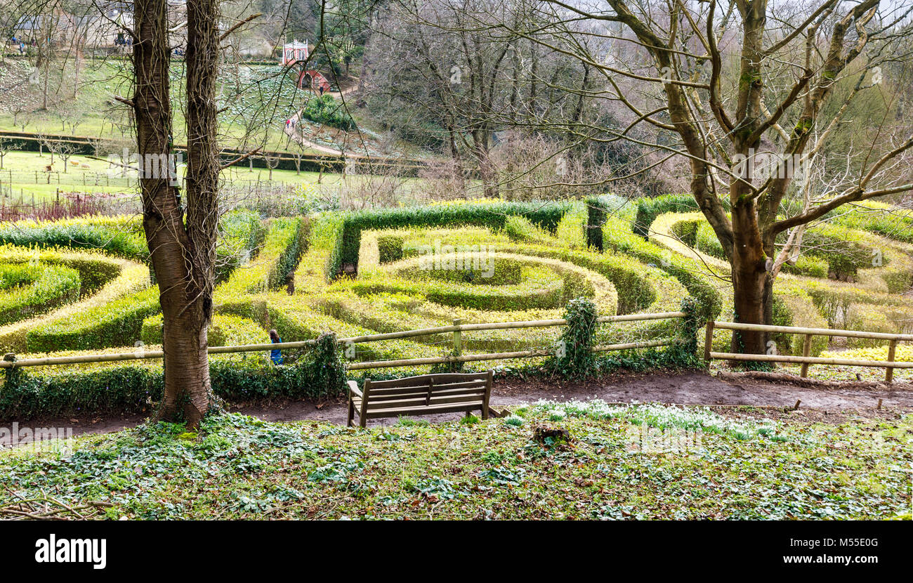 Sightseeing: The privet hedge 250 Anniversary Maze at Painswick Rococo Garden, Painswick, Gloucestershire Cotswolds - Stock Image