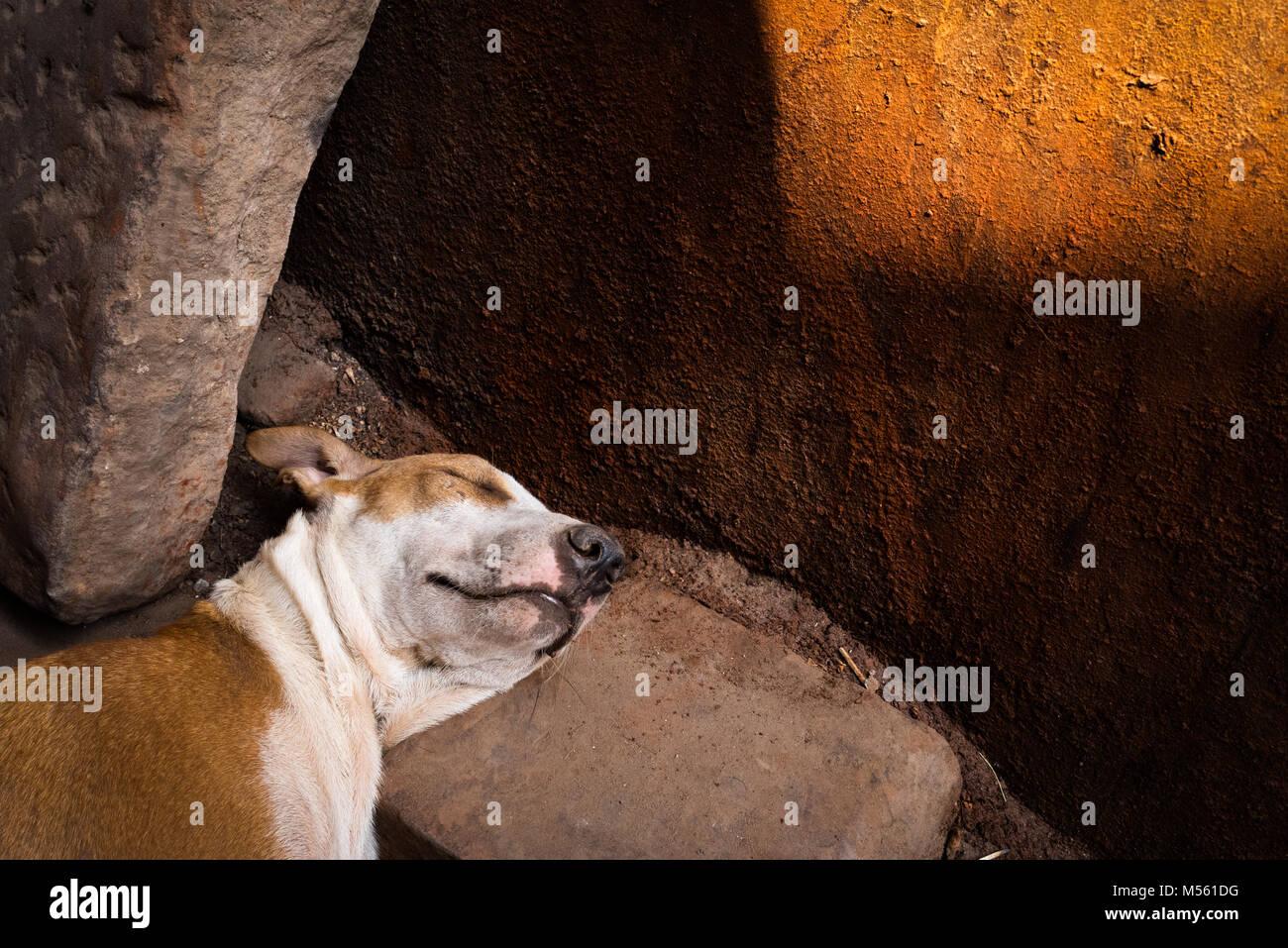 A dog sleeps on a rock in Varanasi, India - Stock Image