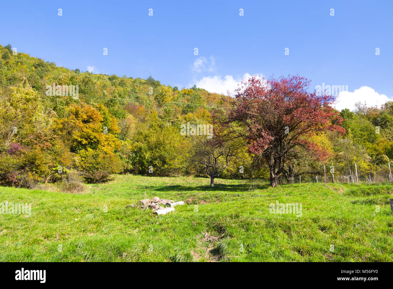 Meadow with trees with autumn colors/ autumn/ trees/ colurs/ green/ meadow - Stock Image