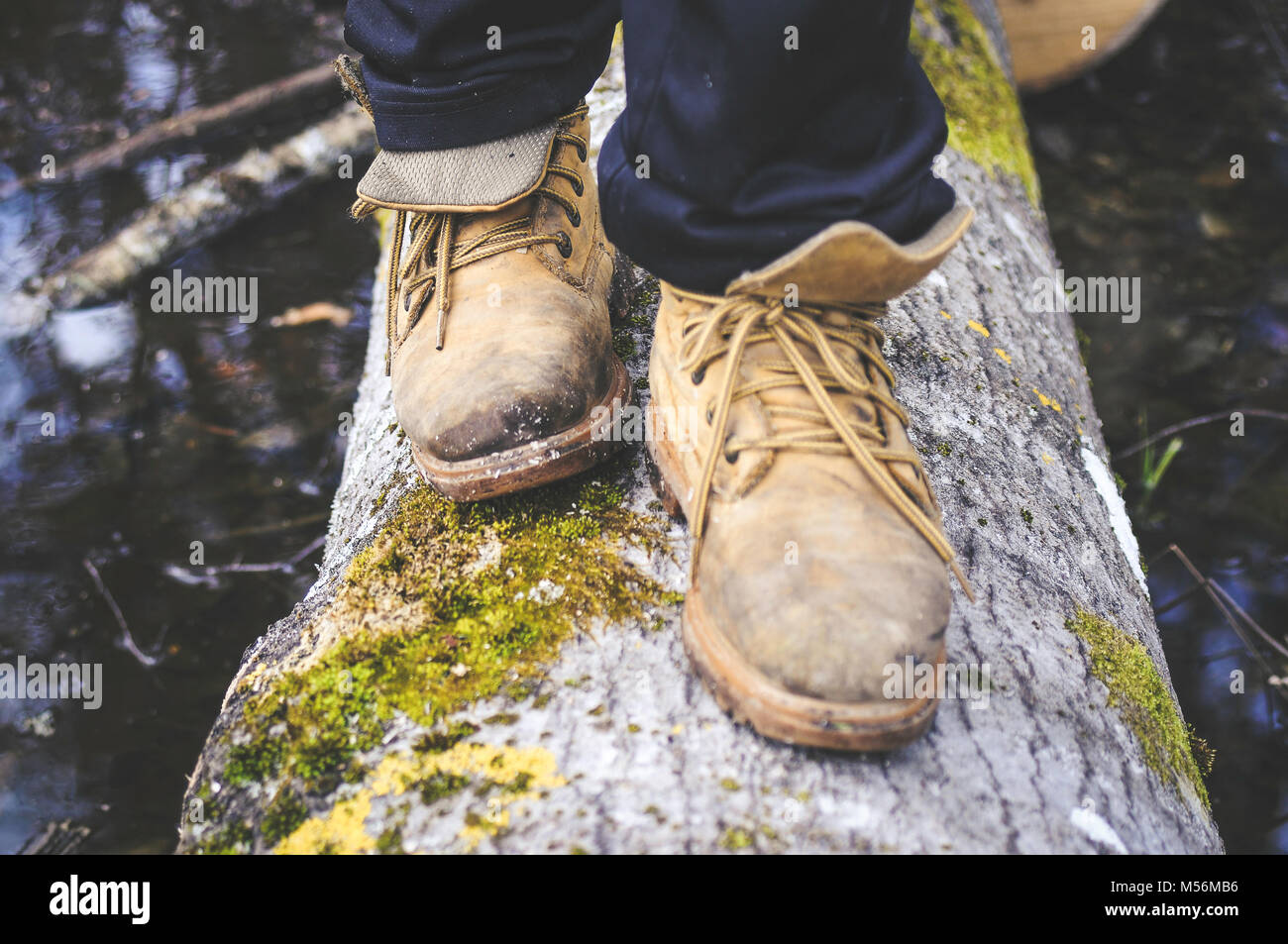 Stands on wooden trunk. Forest environment. - Stock Image