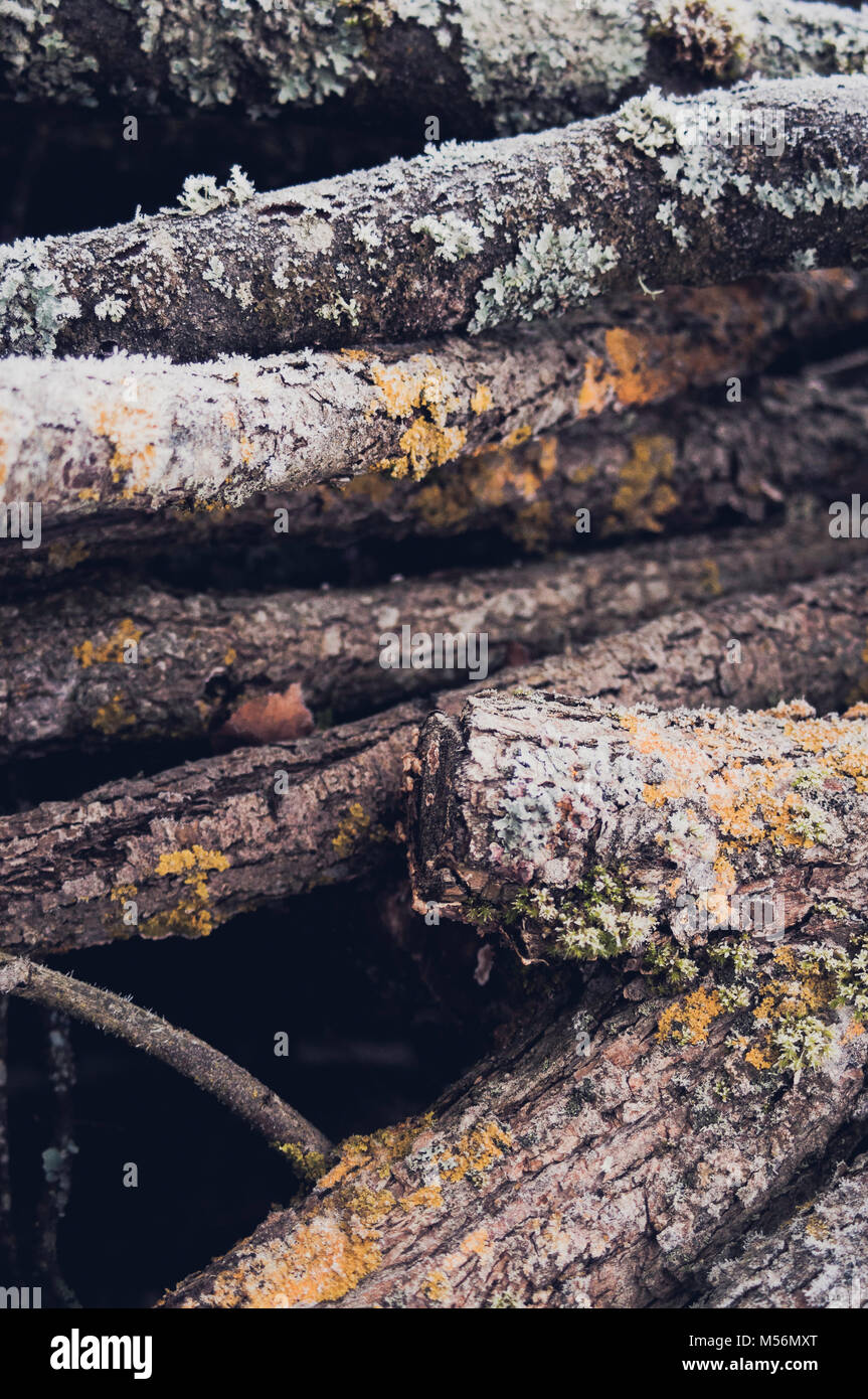 Textured and colorful branches. Abstract composition. Background. - Stock Image