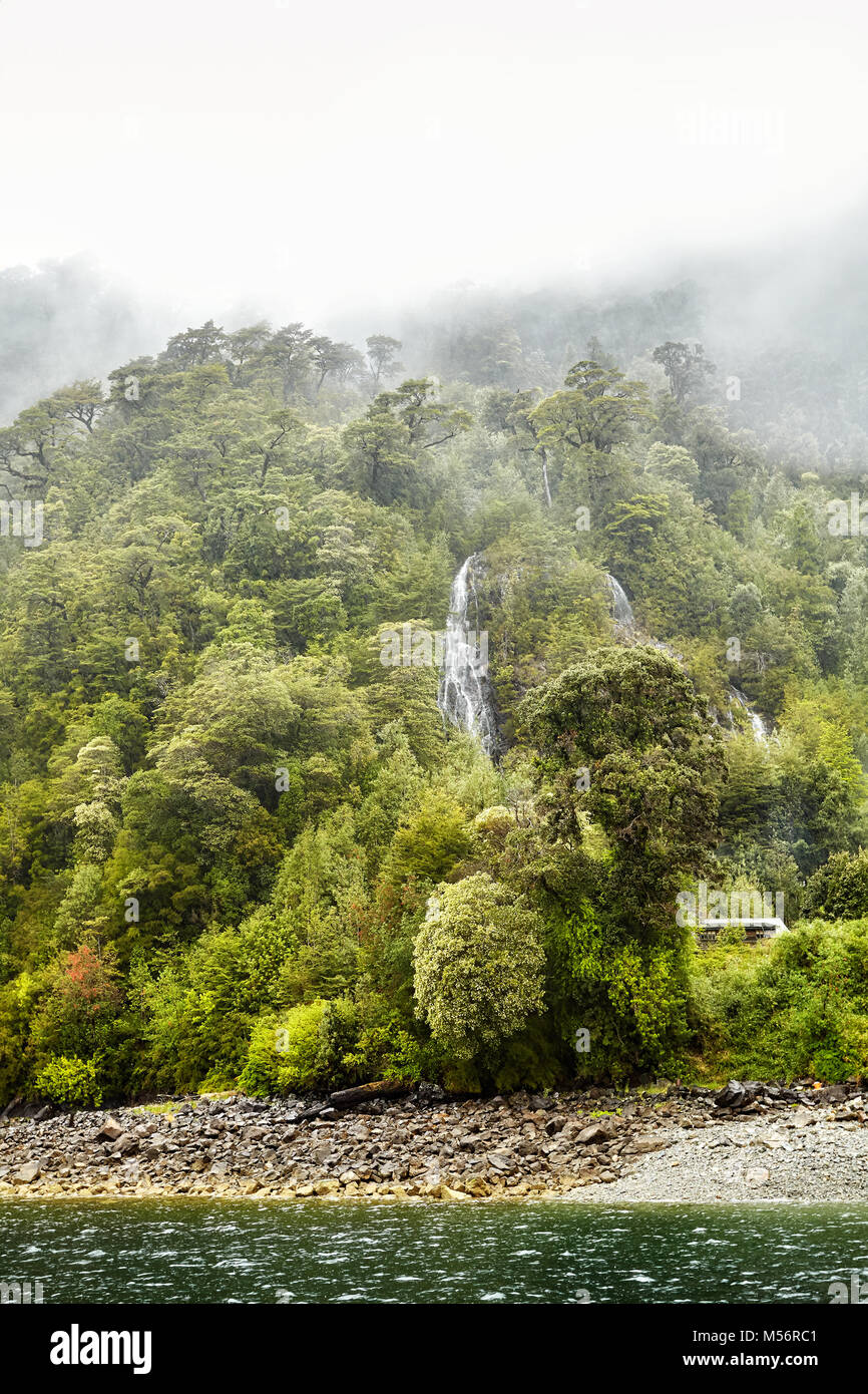 Forest on a rainy day in Carretera Austral, Chile. - Stock Image
