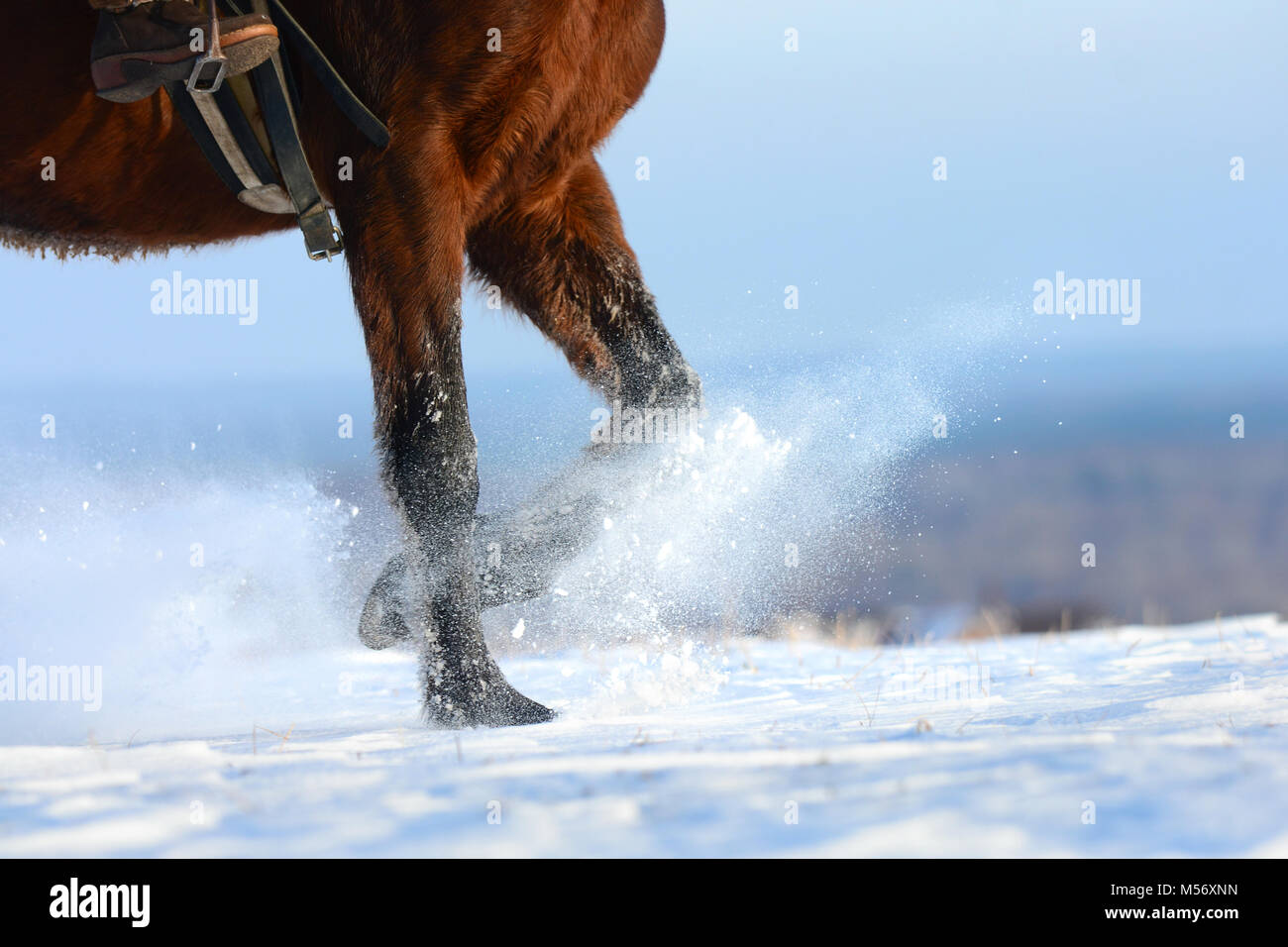 Horses hooves, legs with snow flying around, rising up.  Sorrel horse running through snowy field, covered dry powder - Stock Image