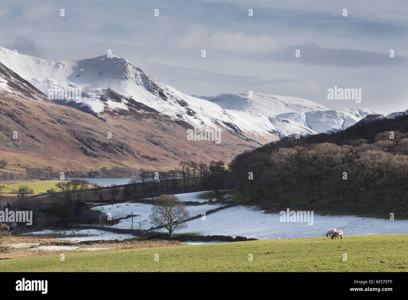 The Lake District, Cumbria, in winter with snow on the tops. Flass Wood, Whiteless Pike and adjacent mountains, - Stock Image