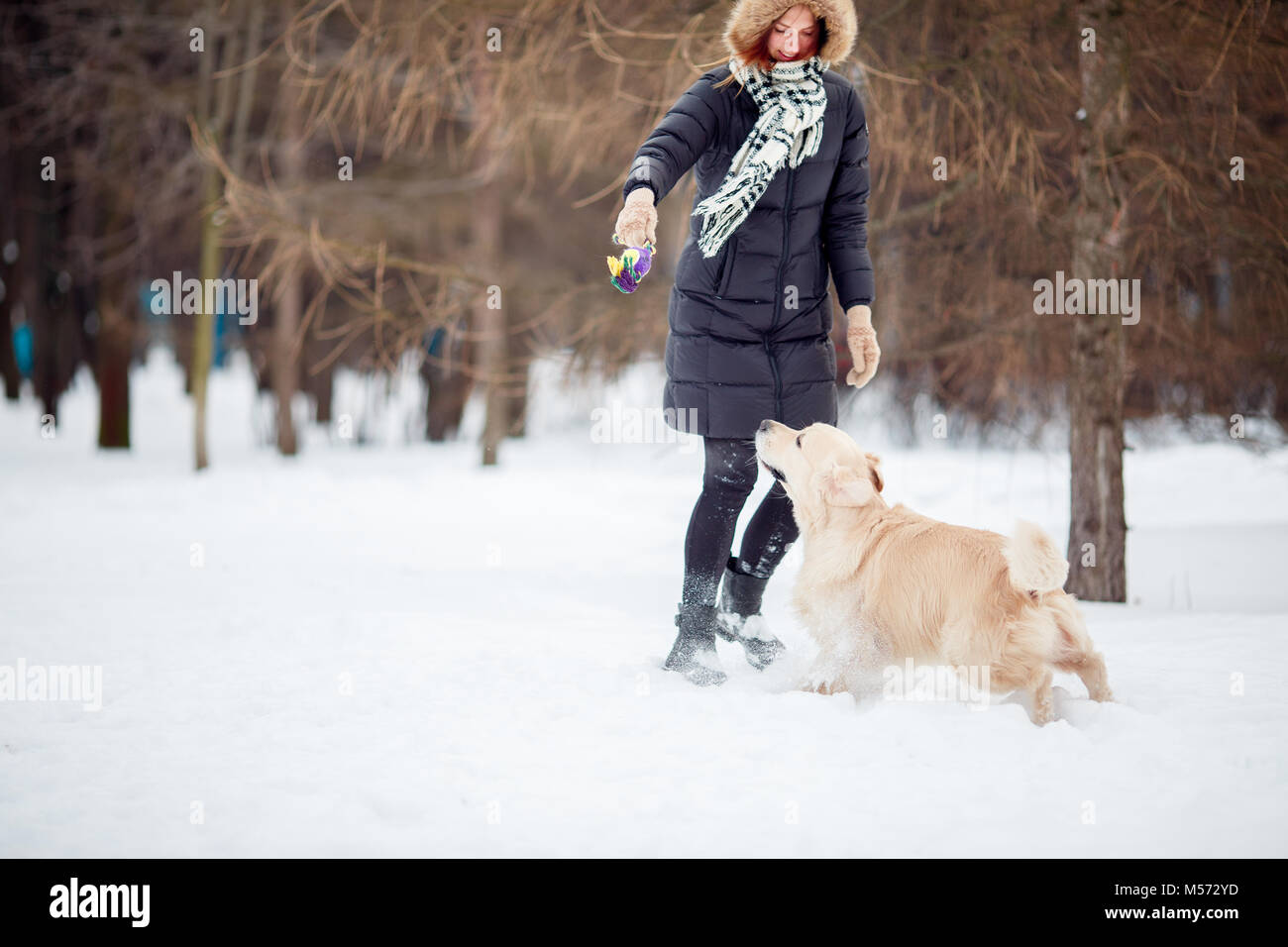 Picture of woman playing with labrador in snowy park - Stock Image