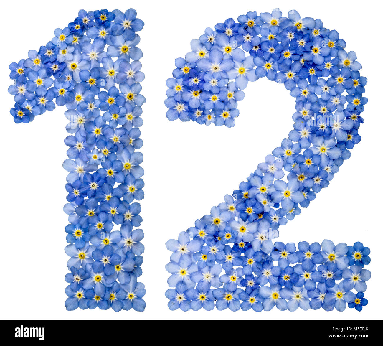 Arabic numeral 12, twelve, from blue forget-me-not flowers - Stock Image