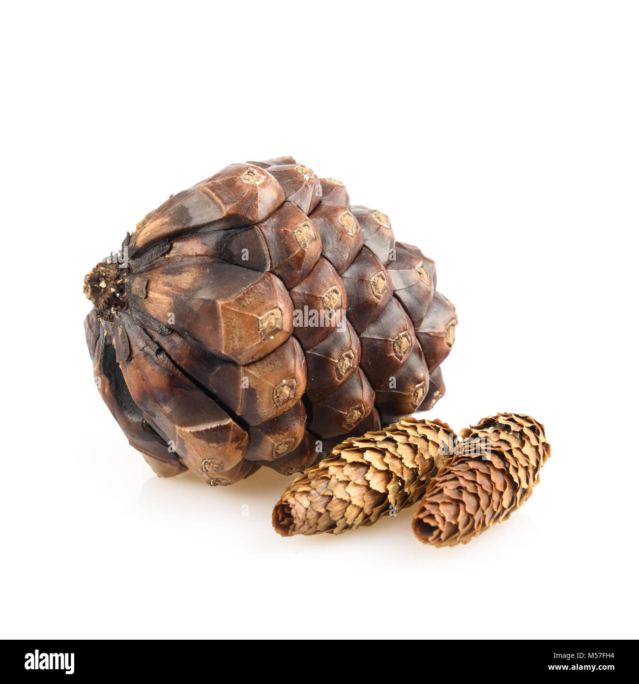 Pine cones isolated - Stock Image