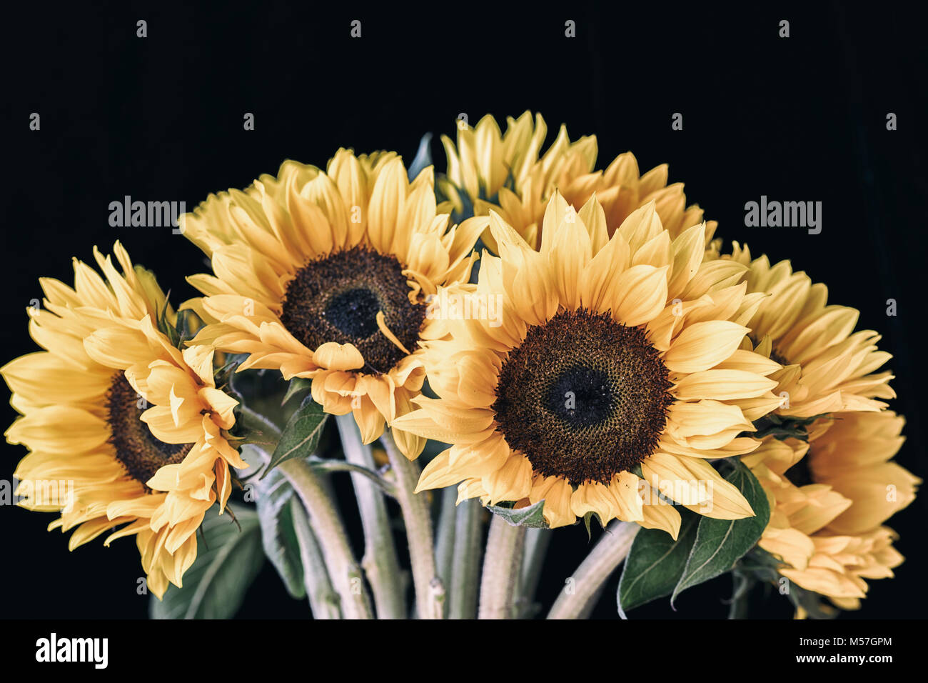 Bouquet Of Bright Sunflowers Against Black Background In Vintage Style