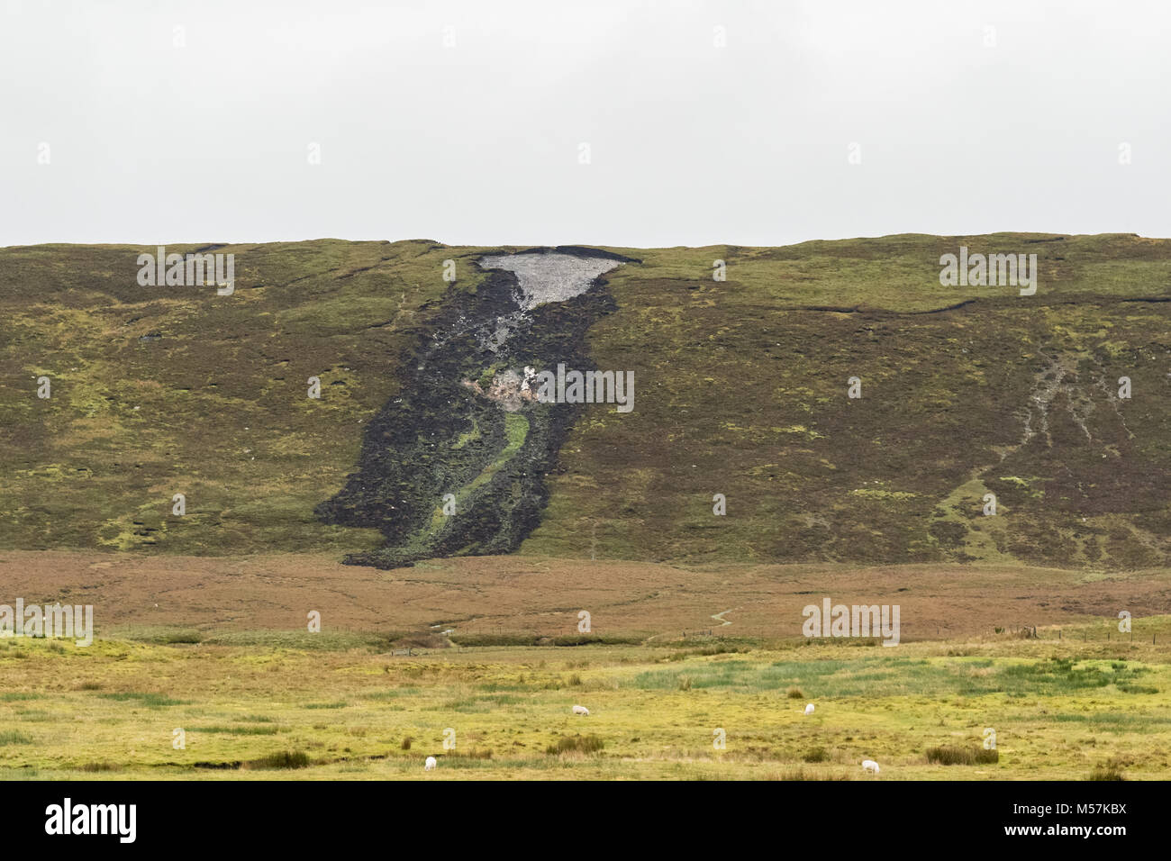 Bog burst or peat landslide slide, Shetland Mainland, Shetland Islands, Scotland, UK - Stock Image