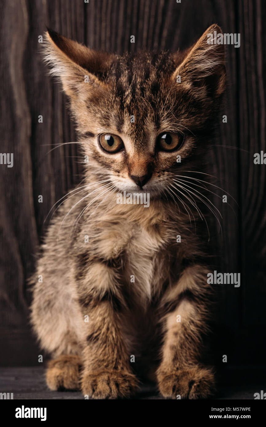 Home pet cat brown color against dark background Stock Photo