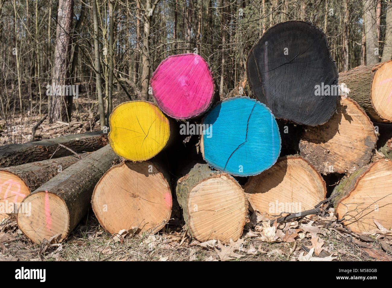 Wood trunks in the forrest Grunewald in Berlin  painted in cyan, magenta, yellow and black. - Stock Image