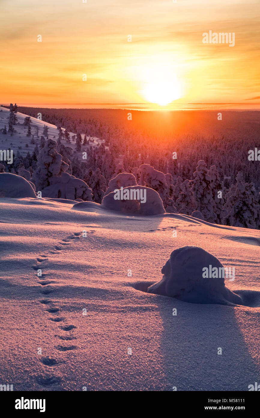 Fox tracks in the sunset - Stock Image