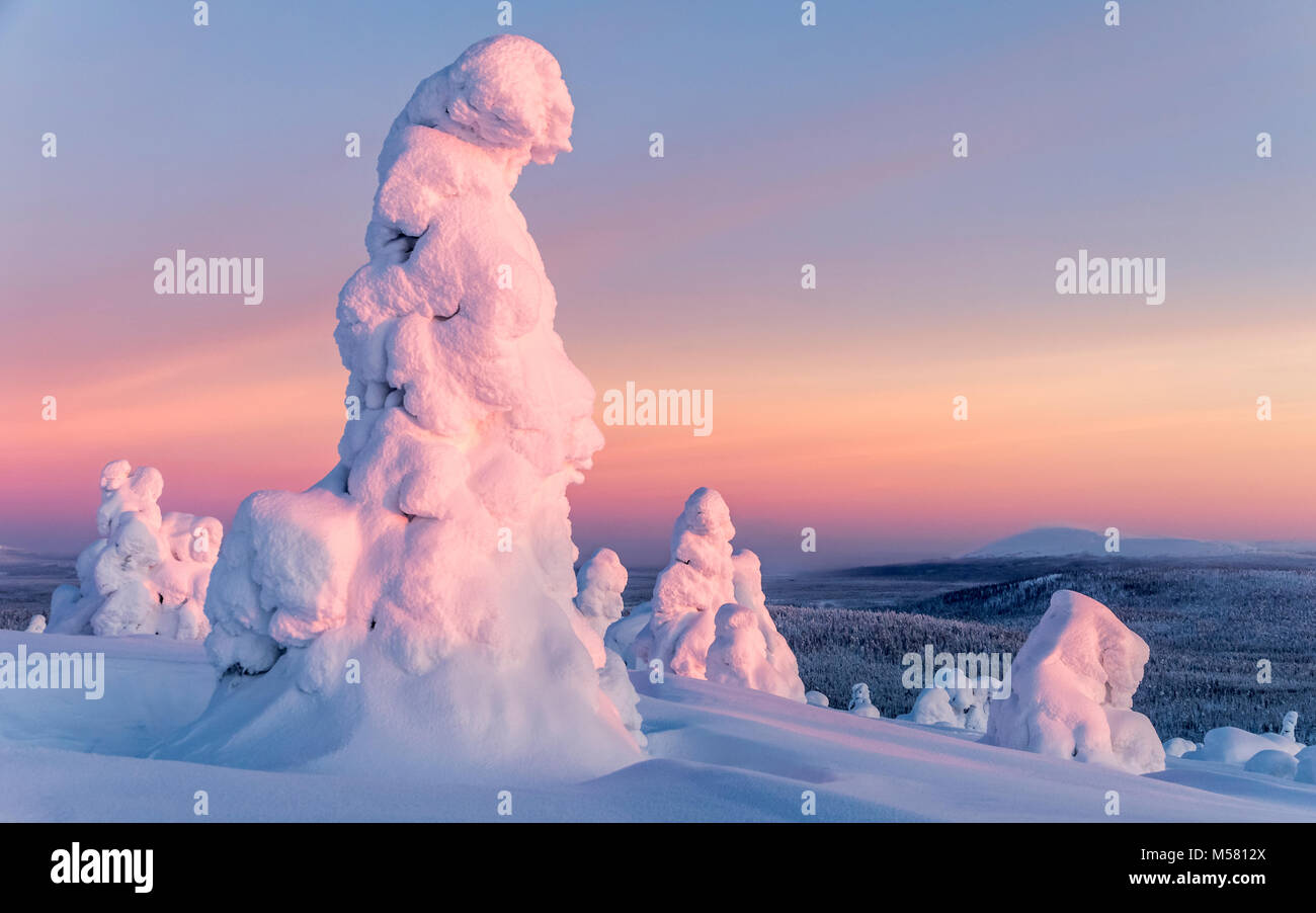 Snowy trees in Finnish Lapland - Stock Image