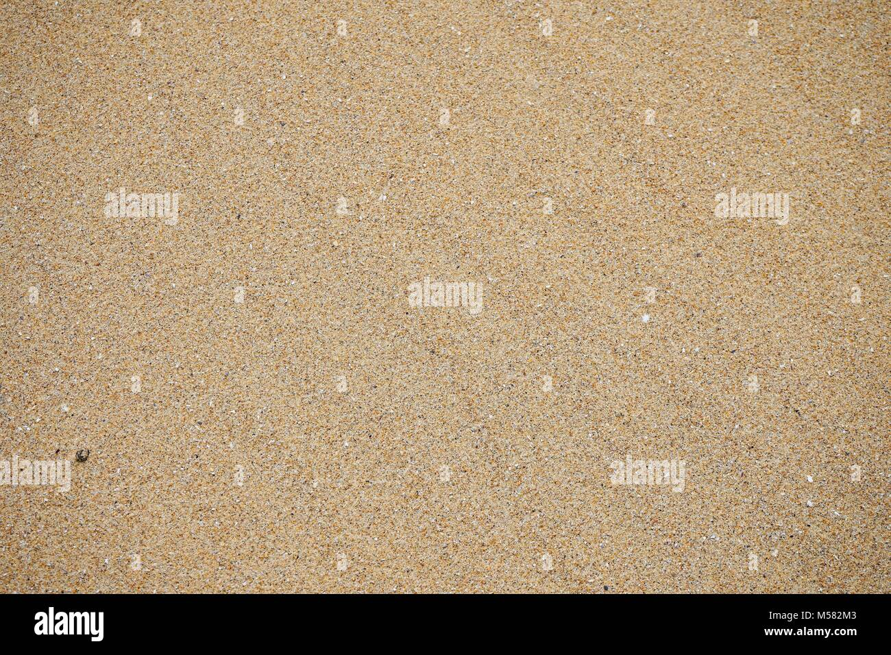 Sand with small pieces of shell grit on a section of beach closeup. - Stock Image
