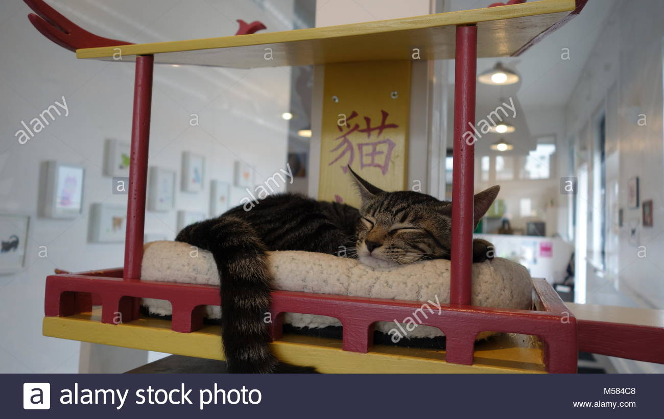 Sleeping cat in the cat shelter waiting for adoption - Stock Image