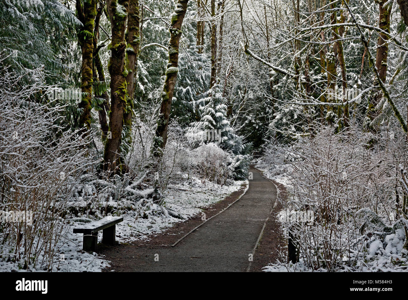 WA13507-00...WASHINGTON - Winter on the Tradition Plateau in the Issaquah Alps. - Stock Image