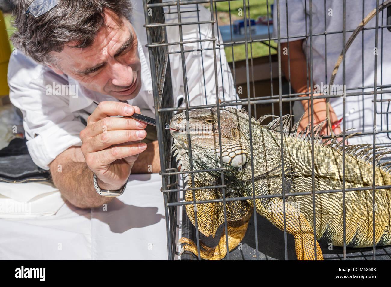 Miami Metrozoo Nonnative Pet Amnesty Day iguana veterinarian examine cage reptile - Stock Image