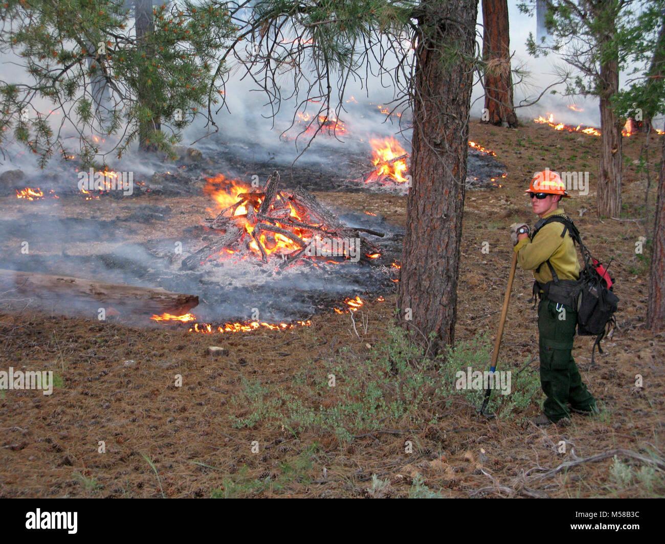 Grand Canyon National Park Hazardous Fuels Reduction