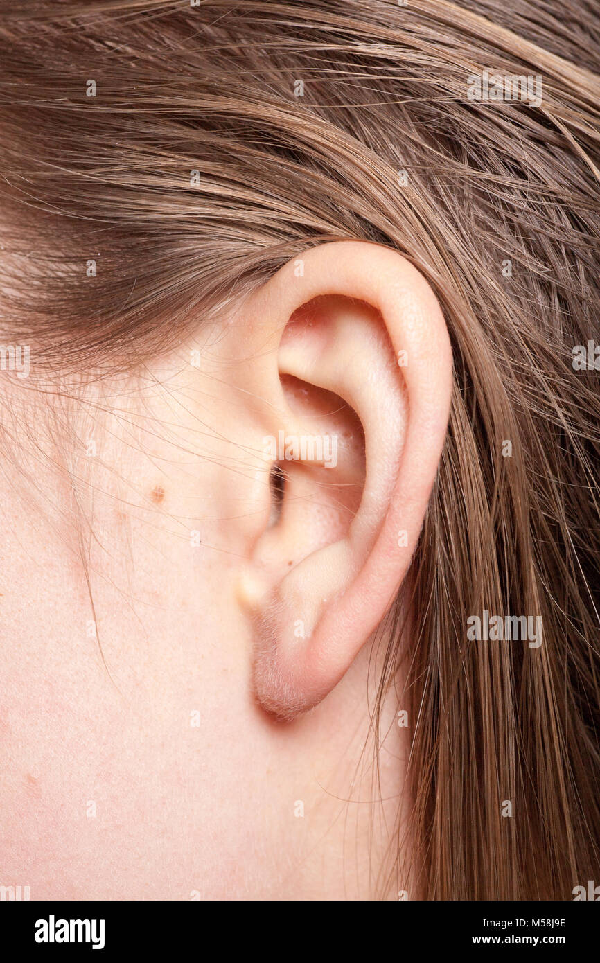 Detail of the head with female human ear and hair close up - Stock Image