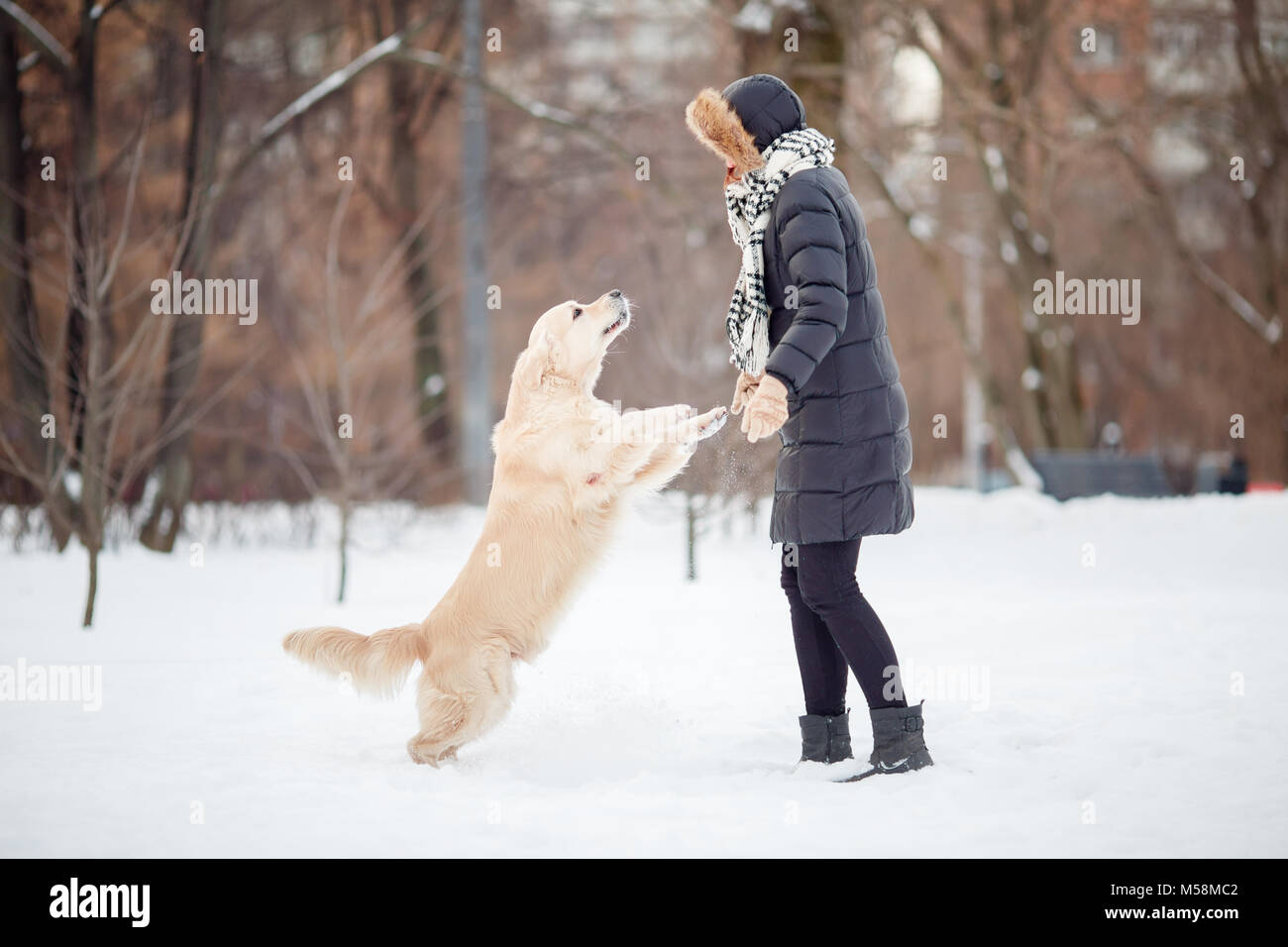 Picture of girl in black jacket playing with labrador at snowy park - Stock Image
